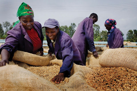 Sorting Kenyan coffee beans for export