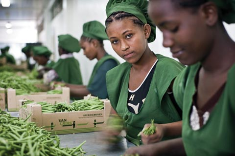 Bean packing enterprise in Ethiopia