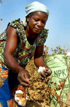 Cotton farmer in Burkina Faso with NPK fertilizer: Africa's nutrient-depleted soils need replenishment