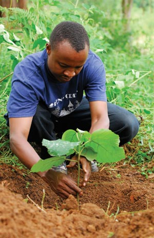 Tree planting in the Usambara Mountains in Tanzania