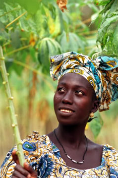 A Gambian farmer with a cassava plant: The crop is attracting greater attention across Africa