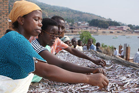 A fish-drying enterprise in Gitaza, Burundi