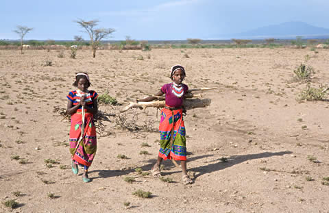 Girls collecting firewood in Ethiopia