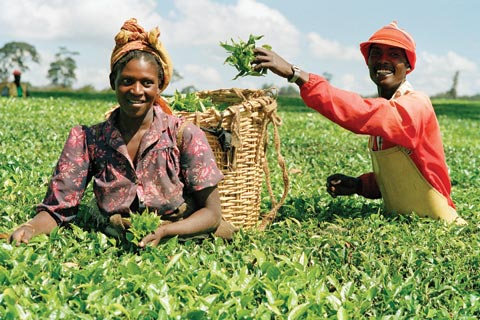 For agriculture — the mainstay of most African economies — to become more sustainable and productive