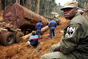 Agent of the World Wildlife Fund monitors commercial logging operations in Gabon to ensure minimal damage to the forest habitat