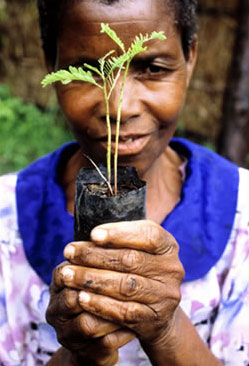 Woman with a seeding, as part of a reforestation project in Malawi