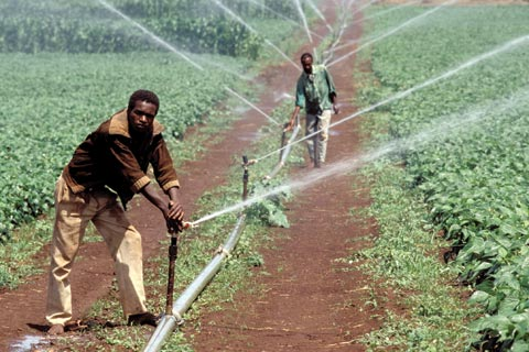 Irrigated farming in Tanzania