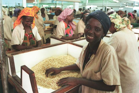 Cashew sorting factory in Mozambique