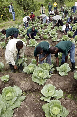 Former combatants get farm training in Liberia