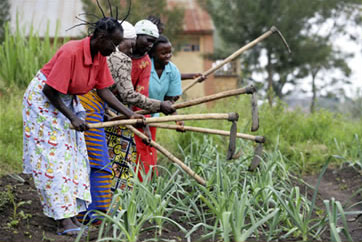 A women's farming cooperative in the Democratic Republic of the Congo