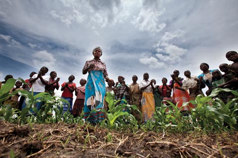 Maize field in Malawi: Women account for 70 per cent of Africa's food production, but often do not have secure access to land.