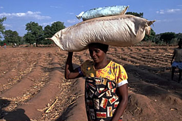 Fertilizer and seed distribution in Malawi: Shopkeepers can help supply farmers