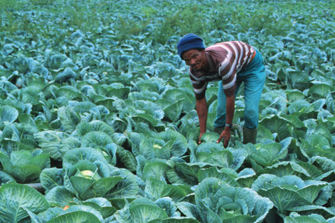 African countries must more actively direct foreign investments into agriculture