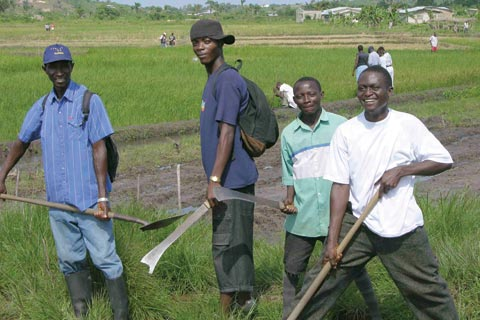 Former combatants in Liberia at an agricultural training programme