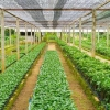 The African Agricultural Technology Foundation (AATF) and the African Union Development Agency-NEPAD (AUDA-NEPAD), have signed a collaboration agreement that will facilitate joint work towards building a market system for the commercialisation of research
