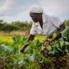 The economic contraction projected for 2020 as a result of the pandemic would disproportionately affect the poor and vulnerable, small and informal businesses, and small-scale agricultural producers