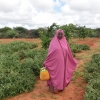 In the Somali region of Ethiopia, recurring droughts and locust invasions were already threatening food security. With COVID-19, the socio-economic impacts being felt across Ethiopia are wide-ranging and serious, with the potential to become severe, the r