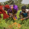 Des agricultrices