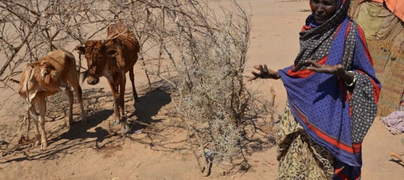 The most severe drought in decades has struck parts of Ethiopia, exacerbated by a particularly strong El Niño effect. This has led to successive failed harvests and widespread livestock deaths in some areas, and humanitarian needs have tripled since the b