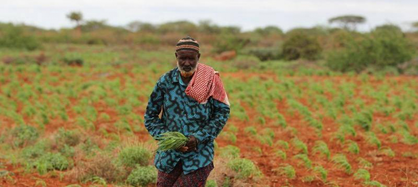 Somalis need support in a wide range of activities, from cropping to livestock breeding and fisheries. Photo: FAO/Frank Nyakairu