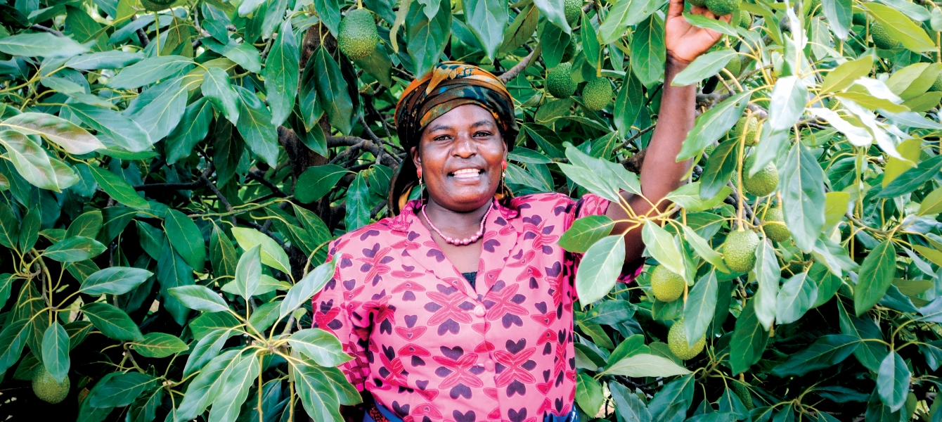 A smallholder avocado farmers in Tanzania's Southern Highlands.