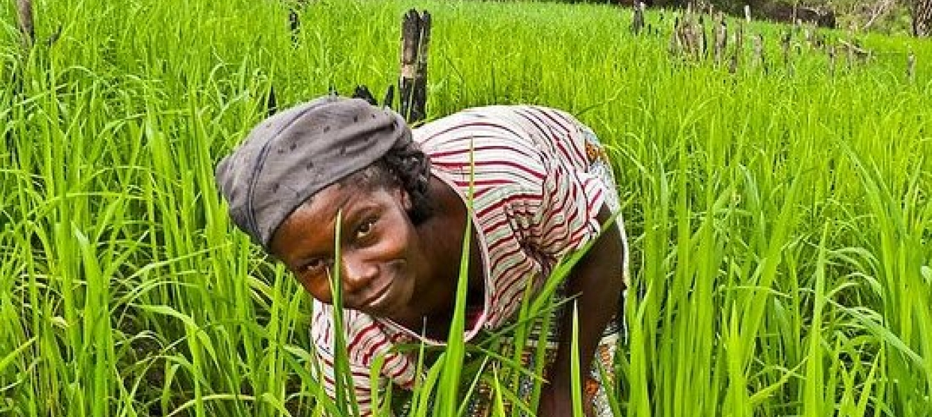 ghana agriculture sector investment programme