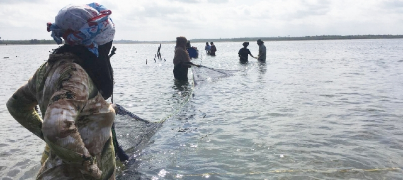 When sea cucumbers are farmed sustainably, they can boost biodiversity and livelihoods in Zanzibar.