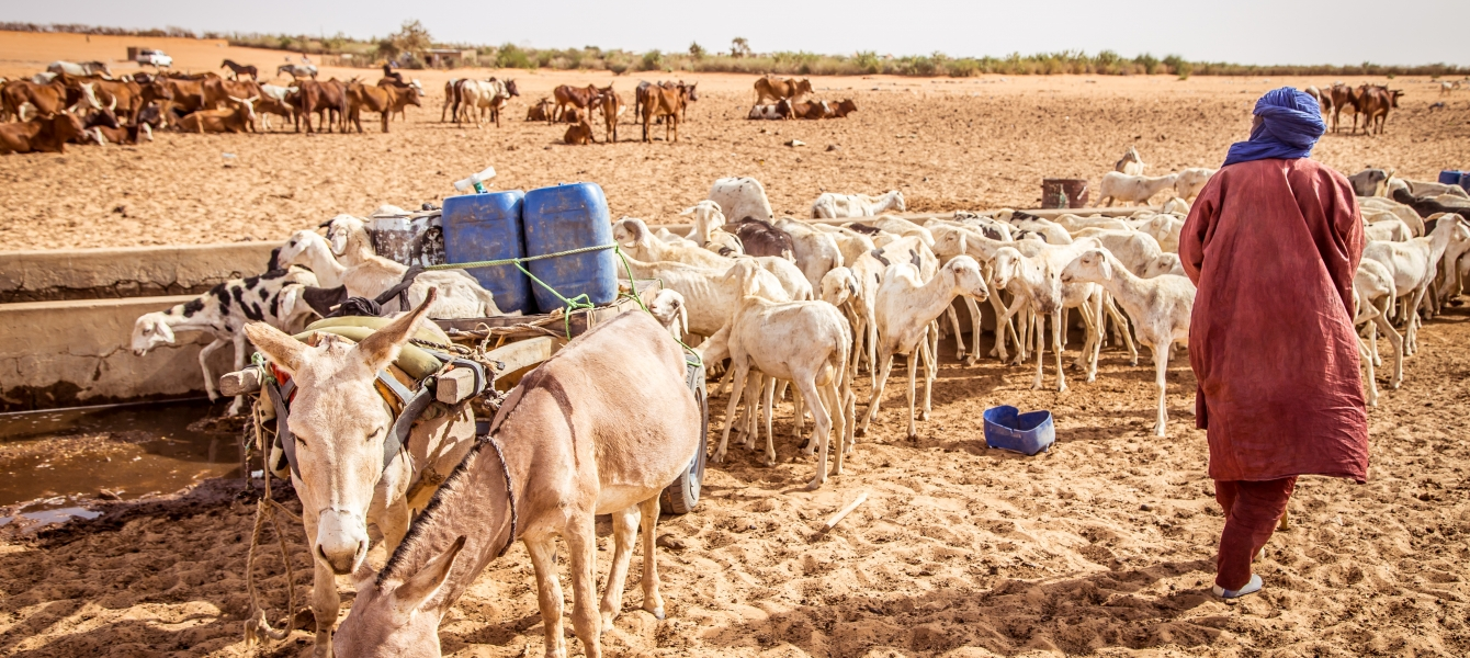 Transhumant herder and families accounts for an estimated 20 per cent of the total population in West and Central Africa, are forced to stop their seasonal migration as a result of border closures.