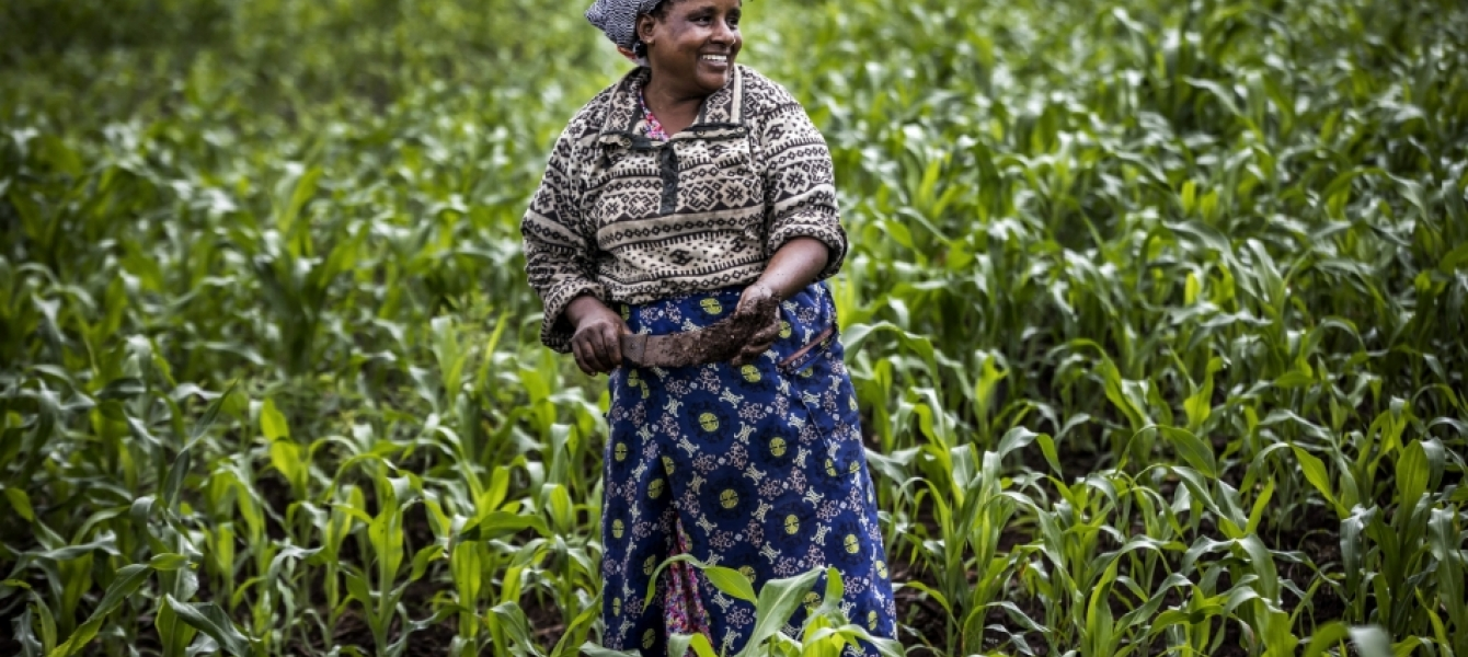 Conservation Agriculture In Kenya Beating Drought And Poor