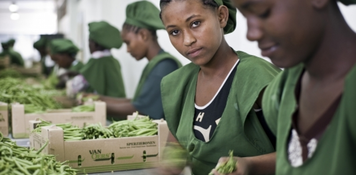 Young workers in Addis Ababa, Ethiopia, packing beans for export.   Panos/Sven Torfinn