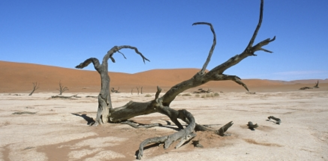Effect of climate change. A dead tree in Namibia's Namib desert. Photo: World Bank/Philip Schuler