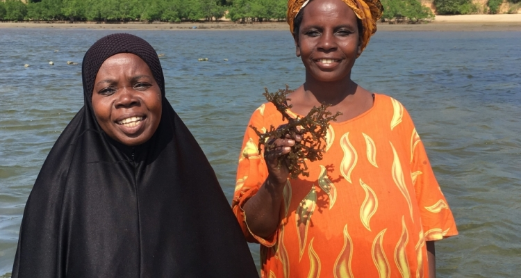 Seaweed production is diminishing because of climate change and warming waters. FAO is teaching local women to farm sea cucumbers instead, offering an alternative income source.