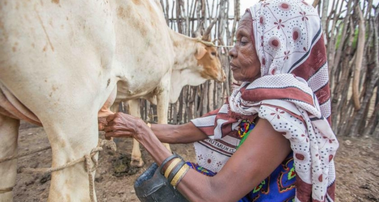 Women like Mariam are amongst the worst impacted by climate change in the delta, with drying conditions forcing them to travel long distances to find water for their livestock or sell the milk they rely on to make a living. Photo by UNEP / Lisa Murray
