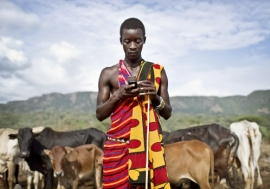 A Kenyan teacher checks his mobile phone while guarding his cattle. Photo: Panos/Sven Torfinn