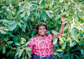 A smallholder avocado farmers in Tanzania's Southern Highlands. Photo credit: USAID Tanzania