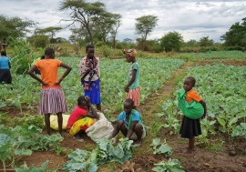 Global food supply chains are complex and include these kale farmers in Uganda.
