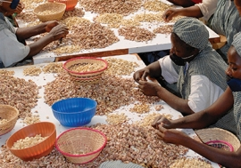 Cashew nut processing and production factory in Sotria B Sarl, Banfora, Burkina Faso.   Alamy/Joerg Boethling