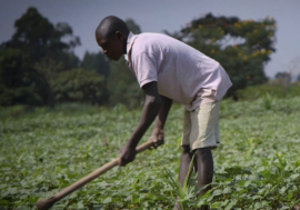 Farmers in Uganda are facing increasingly erratic climatic conditions which are impacting on agricultural production.