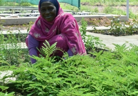 A woman tends to saplings in the tree nursery in Al Jabalain, Sudan.