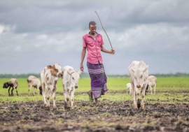 Climate change is putting increasing pressure on the Tana Delta's residents and their surrounding ecosystems, with farmers and herders clashing as they vie for access to land and pasture. Photo by UNEP / Lisa Murray