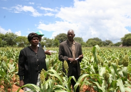 Simnai and Phillip Tshuma, smallholder farmers from Hwange, Zimbabwe, show off their sorghum crop planted using fertilizers. Photo: Busani Bafana