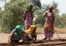 The Great Green Wall initiative created close to 120 000 farming jobs.