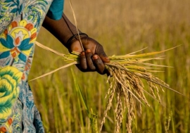 Food insecurity increases by 5–20 percentage points with each flood or drought in sub-Saharan Africa