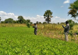 Crop assessment in South Sudan. Photo: FAO