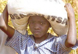 Food aid arrives in Malawi, but will the region get enough relief to prevent many more deaths?  Photo : ©WFP / Mike Higgins