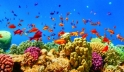 An underwater view of fishes and coral reef in the Red Sea near Marsa Alam, Egypt
