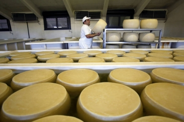 Prices of dairy products dropped in July mainly due to lower import demand from China, the Middle East and North Africa amid abundant EU milk supplies. Photo: FAO/Alessia Pierdomenico