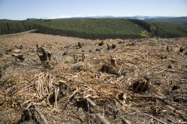 Logged plantation in KwaZulu-Natal, South Africa. Photo: AMO/David Larsen