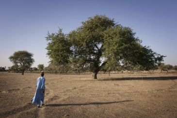An area that used to be on the edge of Lake Chad. The drying lake has exacerbated suffering for millions.