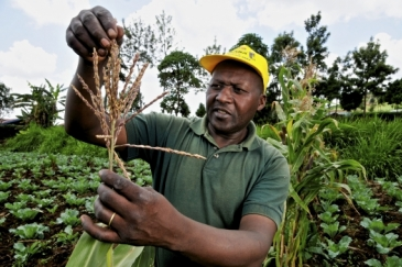 A farmer in Mount Kenya region in Kenya. Photo: CIAT/Neil Palmer